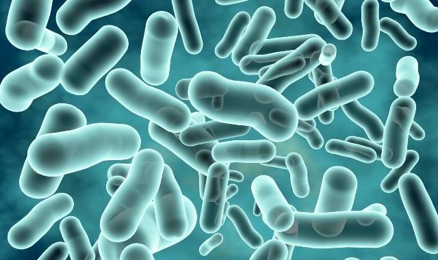 bacteria-gut-health-weightloss-diet (2)